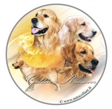 Golden Retriever Dekal