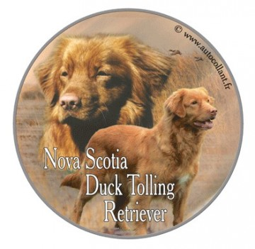 Nova Scotia Duck Tolling Retriever Dekal