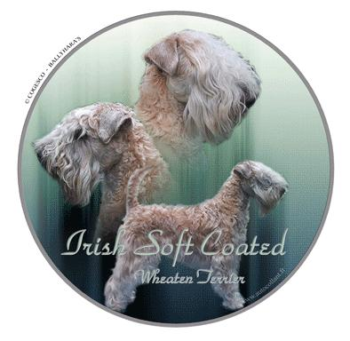 Irish Soft Coated Wheaten T